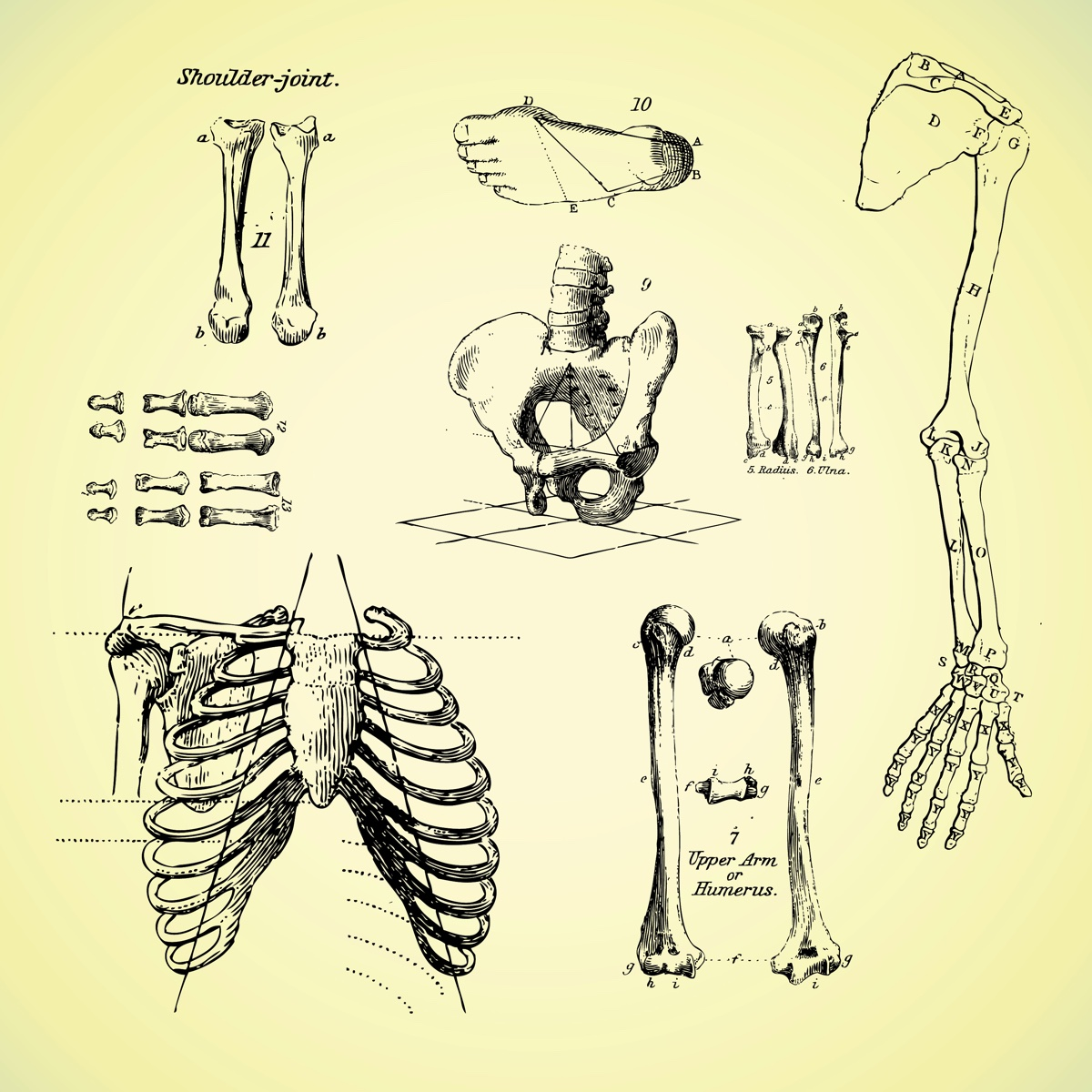Skeleton anatomy as metaphor for email template