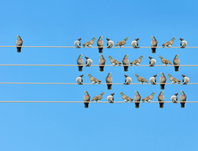 White labeling birds on telephone wire 360x274