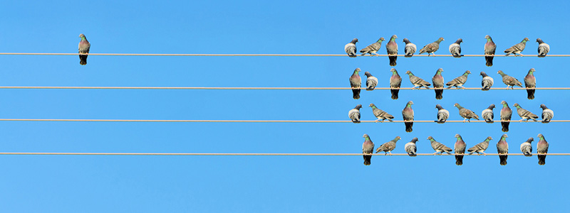 White labeling birds on telephone wire 800x300